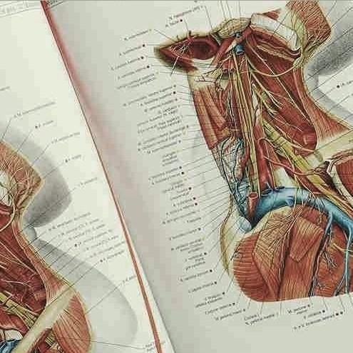 Anatomia humana dissecada em 1904 é uma verdadeira obra de arte